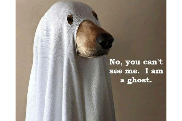 A dog dressed up as a ghost