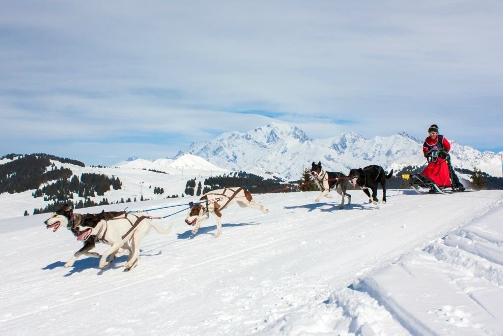 dog sledding in val d'isere